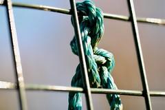 Tied in. HFF (AngharadW) Tags: blue nylon square knot tie wales cymru caerdydd cardiff autumn rope green fencedfriday friday fence