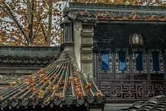 Hu Xue Yuan House: the fragment of the rooftop (bodro) Tags: china hangzhou huxueyuanhouse autumncolors garden rooftop yellowleaves