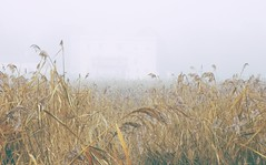 Misty day on the Exe estuary (pike head) Tags: olympus570uz exeestuary devon uk england southwest southdevon misty wintery