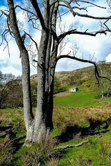 Yorkshire Dales, UK (Robert J Heath) Tags: trees alpes trekking walking pics hiking alpen paysage grassland sentiero rocce picturesque landschaft wandern marche paesaggio dales roches gehen randonee cresta arete picco hugel sentiers spitzen pittoresque malerisch escursioni pittoresco footpaths imfreien landscharftlich bergrucken