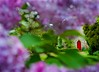 Red door (stevevalentine79) Tags: flowers trees garden purple religion reddoor treeblossom clarepriory nikond700