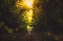 Running Away ({jessica drossin}) Tags: light boy sunset green field leaves childhood rural back kid vines glow child bokeh farm away running dirt grapes tall jessicadrossin wwwjessicadrossincom jdoneclickportrait jdoneclickprotraitperfection