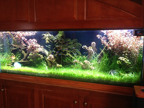Live Planted Aquarium - Private Residence - CT - 2
