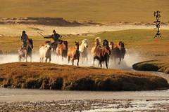 Inner Mongolia () Tags: china travel autumn horse nikon racing grassland  innermongolia       bashanggrassland  mongolianherders