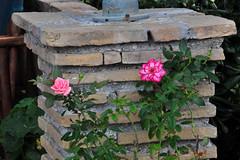 Roses and Bricks (RobW_) Tags: roses brick wednesday october greece column zakynthos freddiesbar tsilivi 2015 07oct2015