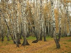 PA070150 (Jasonito) Tags: autumn russia olympus omsk осень 2015 россия mft омск micro43 microfourthirds epl3 olympusepl3