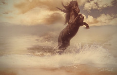 Guardian (Stella_Kar) Tags: sky horse art beach water clouds composition photomanipulation golden artwork waves fineart digitalart shore blackhorse beautifulhorse