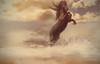 Guardian (Stella_Kar) Tags: sky horse art beach water clouds composition photomanipulation golden artwork waves fineart digitalart shore blackhorse beautifulhorse