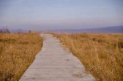 Hohes Venn Boardwalk, Belgium (Jordan Wilms) Tags: park belgium eifel national venn hohes