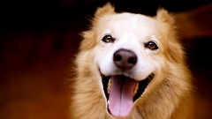 Dick (Vigarista / Biter)! (ricardo.baena) Tags: dog adapter nofilter fd f12 adaptador adapters canonfd notreatment semtratamento adaptadores semfiltro fdnex