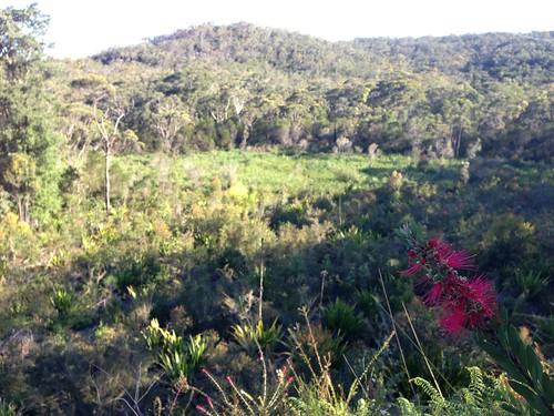 Calga Hanging Swamp - Brisbane Water National Park