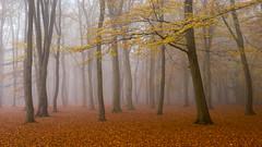 Misty Woods - Surrey (Christopher Pope Photography) Tags: trees mist fog sunrise autum beech aldershot nikond610 christopherpope