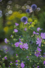missing the summer (izzieLiving) Tags: bokeh sommer westpark helios blüten