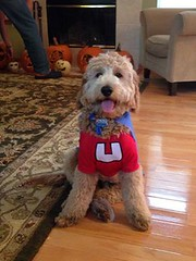 jagger-is-ready-to-hit-the-streets-for-puppy-treats-_10629480245_o