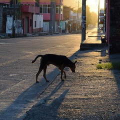 Day 228. Different view on dogs down here. There isn't the strict form of ownership there is in the U.S. Many dogs are strays that people feed when they hang around their house. I've met many people who've said 'we have dogs,' but the dogs came and went a