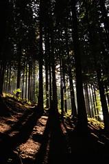 Les (svehla.jiri) Tags: pecpodsnezkou les strom stromy priroda proda stn stin nikon nikond90 d90 18105 18105mm nikonnikkor baum baume bume wald sommer natur esko echy tschechien nature tree schatten