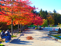 PA090509 (mina_371001) Tags: canada coloredleaves autumn lifeincanada lifeinvancouver vancouver stanleypark park nature beautiful photographywork olympusomdem10