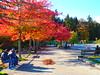 PA090509 (mina_371001) Tags: canada coloredleaves autumn lifeincanada lifeinvancouver vancouver stanleypark park nature beautiful photographywork olympusomdem10