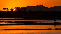 Orange quiet (luigig75) Tags: sicily sicilia italia italy sunset tramonto favignana island bird castle sun tree saline salt flats 70d 70200f4l canonef70200mmf4lusm