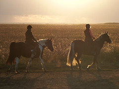 start the day, the horsie way (Peanut1371) Tags: horse sunrise cleethorpes