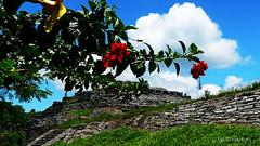 Pirmide (marthahari) Tags: puebla zonaarqueolgica cuetzalan airelibre pirmides arquitectura cielo paisaje planta