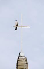 0996 Mellrich Vogel (RainerV) Tags: 1110 230 kreuz mellrich vogel nordrheinwestfalen deutschland deu anröchte rainerv nikond300