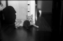 Untitled-2 (Avelino Oliveira) Tags: leicam6 50mm doublex 400 hc110 film analogue analog