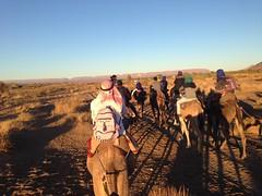 Zagora camel trek (John Englart (Takver)) Tags: morocco zagora cameltrek camels desert saharadesert