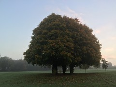 Shades of Autumn - Three Trees (firehouse.ie) Tags: leaf colours colors autumnal fauna flora nature leaves trees tree western midwest ennis countyclare ireland 2016 october fall autumn