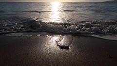 1 Rock Rolling (reflection below) (Mertonian) Tags: video amatuervideo nature rock rolling wave ocean beach cycles maui maui2016 hawaii awe beauty canon powershot g7x mark ii canonpowershotg7xmarkii sand foam wilderness sunset dusk
