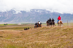 Equestrian Trail _5490 (hkoons) Tags: icelandichorse skagarfjã¶rã°urfjord openair clouds country horses iceland animals bay cabin countryside equestrian farm farms field fiord fjord fodder foothill grains grass grassland graze grazing green greens hill horse inlet island landscape mammal mammals mountainside nature north outdoor outdoors pastoral pasture pets ranch riding saltwater sea sky sun water