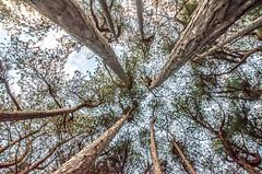 DSC_1273 (Andrew J Horrocks) Tags: formby pinewoods freshfield liverpool trees