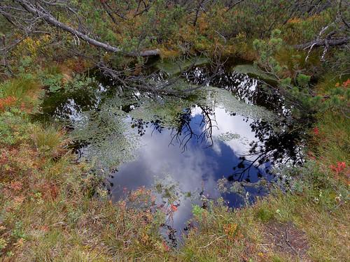 Moorauge, Zwieselter Filz, Foto:Alexandra  6805