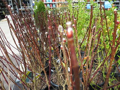 IMG_1416 (pbinder) Tags: 2016 201603 20160322 march mar tuesday tue kansas city missouri kansascity kansascitymissouri kc mo kcmo lowes plants