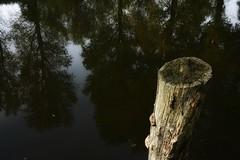 River of time (Song by Van Morrison). (detlefgabriel17) Tags: river fluss reflektionen reflections riveroste northgermany norddeutschland niedersachsen lowersaxony herbst autumn wasser water trees bume