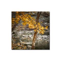 Albion Falls No. 3 (WarrensPix) Tags: niagara escarpment