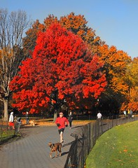 Red is in Vogue (ZoK) Tags: newyorkcity centralpark greatlawn redsetter redskirt redsweater red redmaple
