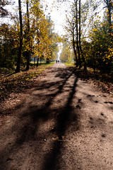 Shadows (Lord Markus) Tags: trees alberi shadows ombre shadow autunno autumn fall 2016 monza parco park parcodimonza colors leaves foglie persone people wideangle grandangolo sentiero terra path woods bosco nikon d300s sigma 1020