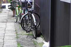 Today's Cat@2016-11-30 (masatsu) Tags: cat thebiggestgroupwithonlycats catspotting pentax mx1 osaka