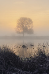 Across the Pond (Andrew G Robertson) Tags: tree pond bushy park london surrey sunrise mist fog canon 5d mkiv mk4
