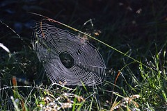 Entrapment (Nick Fewings 4.5 Million Views) Tags: sunlight uk hampshire newforest nickfewings wildlife nature silk gossamer web spider flickr