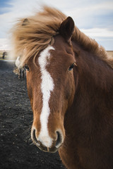 of course | Þykkvabæjarvegur, south iceland (elmofoto) Tags: south iceland þykkvabæjarvegur island horse icelandic icelandichorse d800 1424mm portrait animal equine travel elmofoto lorenzomontezemolo windblown hairdo mane rangartingytra rangarvallasysla whiskers instagram fav100 fav200 fav300 fav400 fav500 50000v