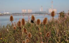 Flower Power (Bluden1) Tags: flowers island warrington mersey runcorn merseyside wigg