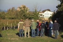 Vendanges 2015 au Vignoble des Hauts de Talmont 1