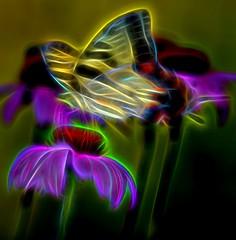 Ready for Flight (Phyllis74) Tags: flower yellow butterfly purple topazglow