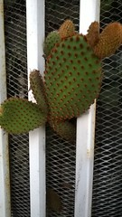 Cactus (theprince_21) Tags: beautiful photography lovely needles prickly plantlife whitefence