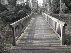 The Bridge - Cemetery 'Stöckener Friedhof'/Hannover (mikehaui60) Tags: bridge cemetery pen germany hannover lowersaxony mft stöckenerfriedhof epm2 olympuspenepm2