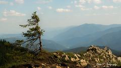 (Eddie P Photography) Tags: brad berge steine landschaft baum carpati karpaten padure peisaj stanci