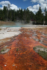 Red bacteria slime at Yellowstone hot spring (OttawaRocks) Tags: red hot spring yellowstone slime bacteria