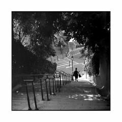 going down • paris, france • 2015 (lem's) Tags: trees shadow woman paris france silhouette minolta femme going down ombre arbres bags bushes campagne escaliers sacs autocord descente